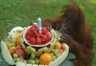 http://www.yumping.com/parques-zoologicos/zoo-y-parque-cuaternario--e11130/fotos/7