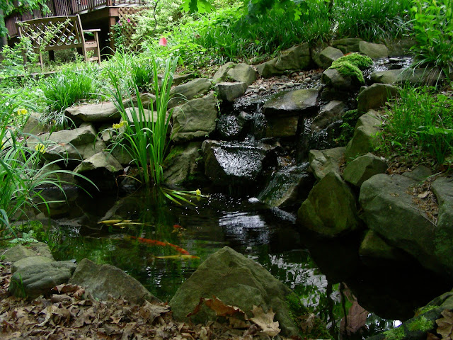 Fish girl writes my tanks an introduction for Koi pond kh level