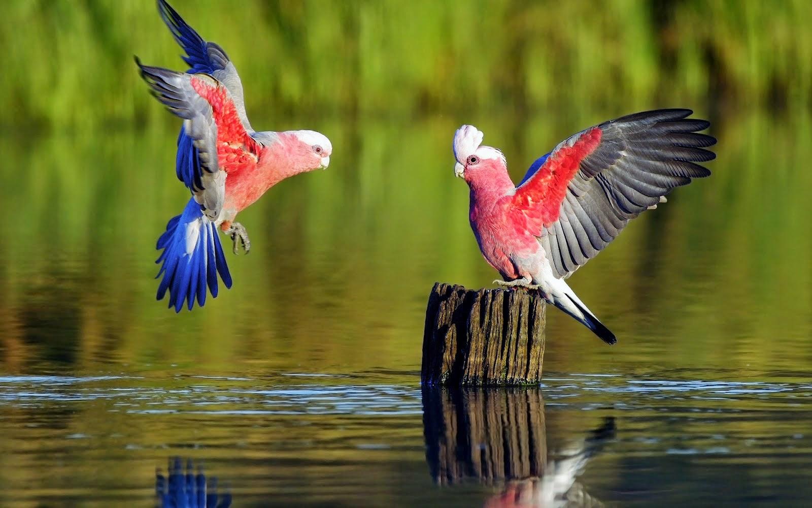 Populares Aves do meu Tempo!: As aves exóticas GL55