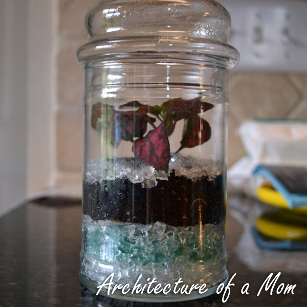 Architecture Of A Mom How To Make A Terrarium With Glass Chips