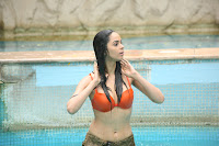 hot, sexy, wet, swimsuit, swimming pool, Mallika, Sherawat