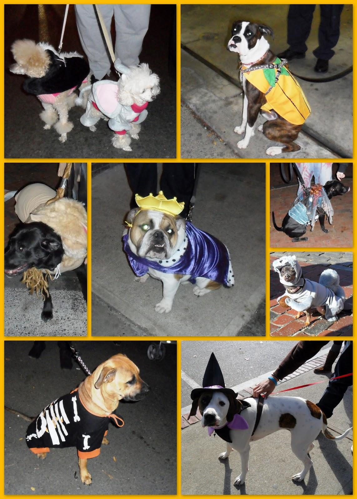 halloween, dogs, costume, salem
