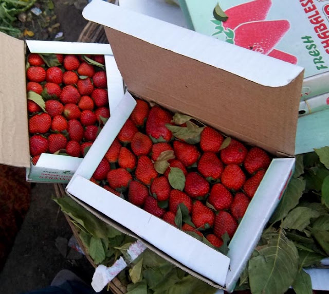 strawberries packed in cardboard boxes