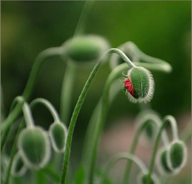 Hairy Flowers