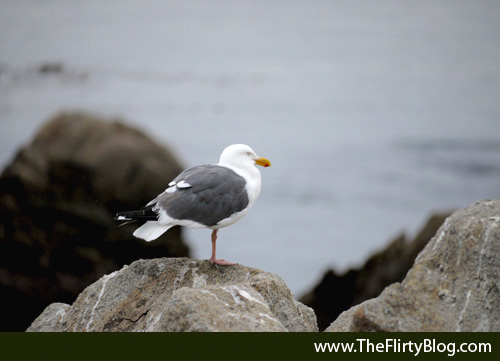 Sleeping Sea Gull