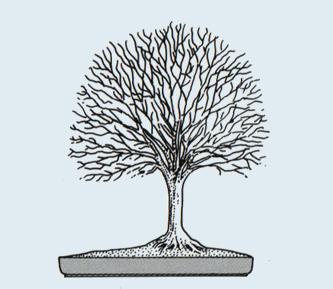 http://evoluzionebonsai.blogspot.it/2015/02/stili-bonsai-hokidachi-scopa-rovesciata.html
