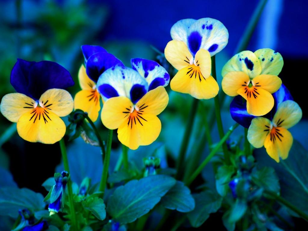 http://1.bp.blogspot.com/-rawqPccTKwg/T2XvulrjEtI/AAAAAAAAKIU/CdIvbqr66MQ/s1600/Sareno-proljetno-cvijece-download-besplatne-pozadine-za-desktop-1024-x-768-slike-kompjuteri-priroda-biljke-proljece-godisnja-doba.jpg