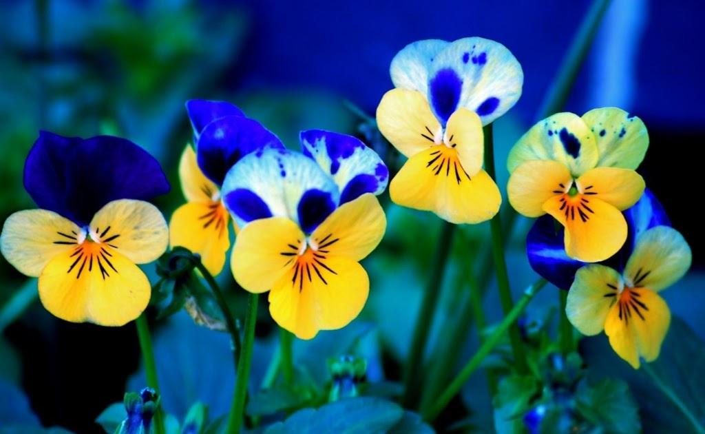 Download besplatne pozadine 1024x768: Šareno proljetno cvijeće