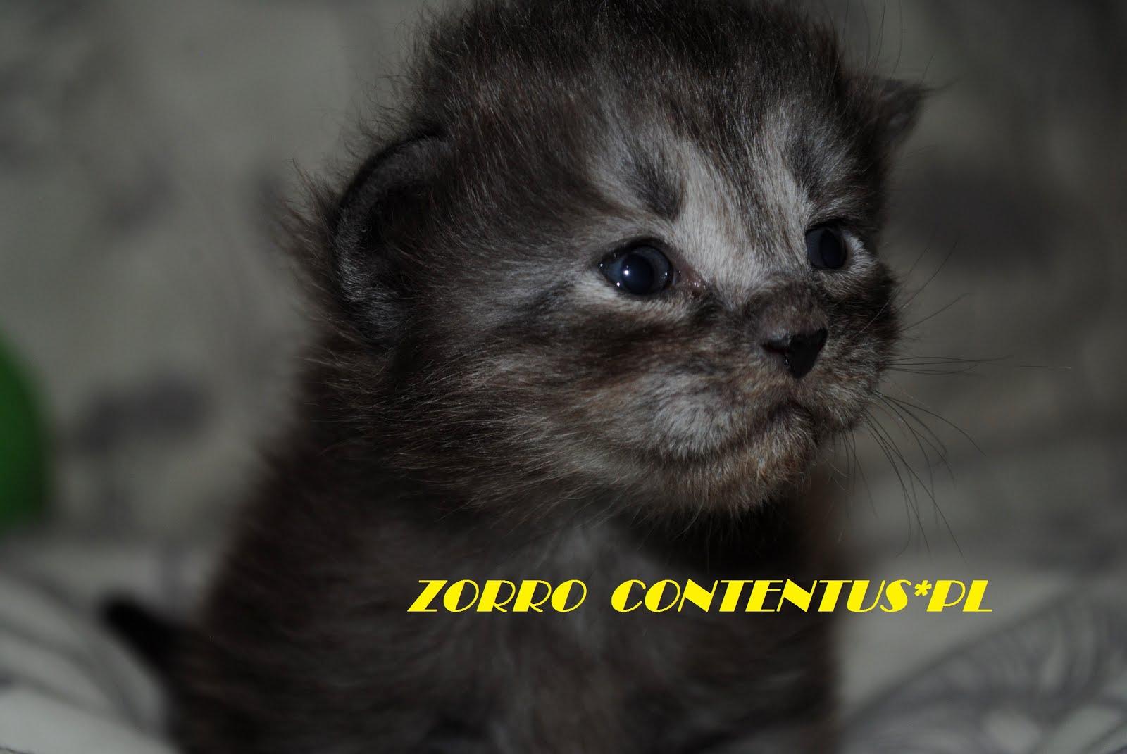 ZORRO Contentus*PL
