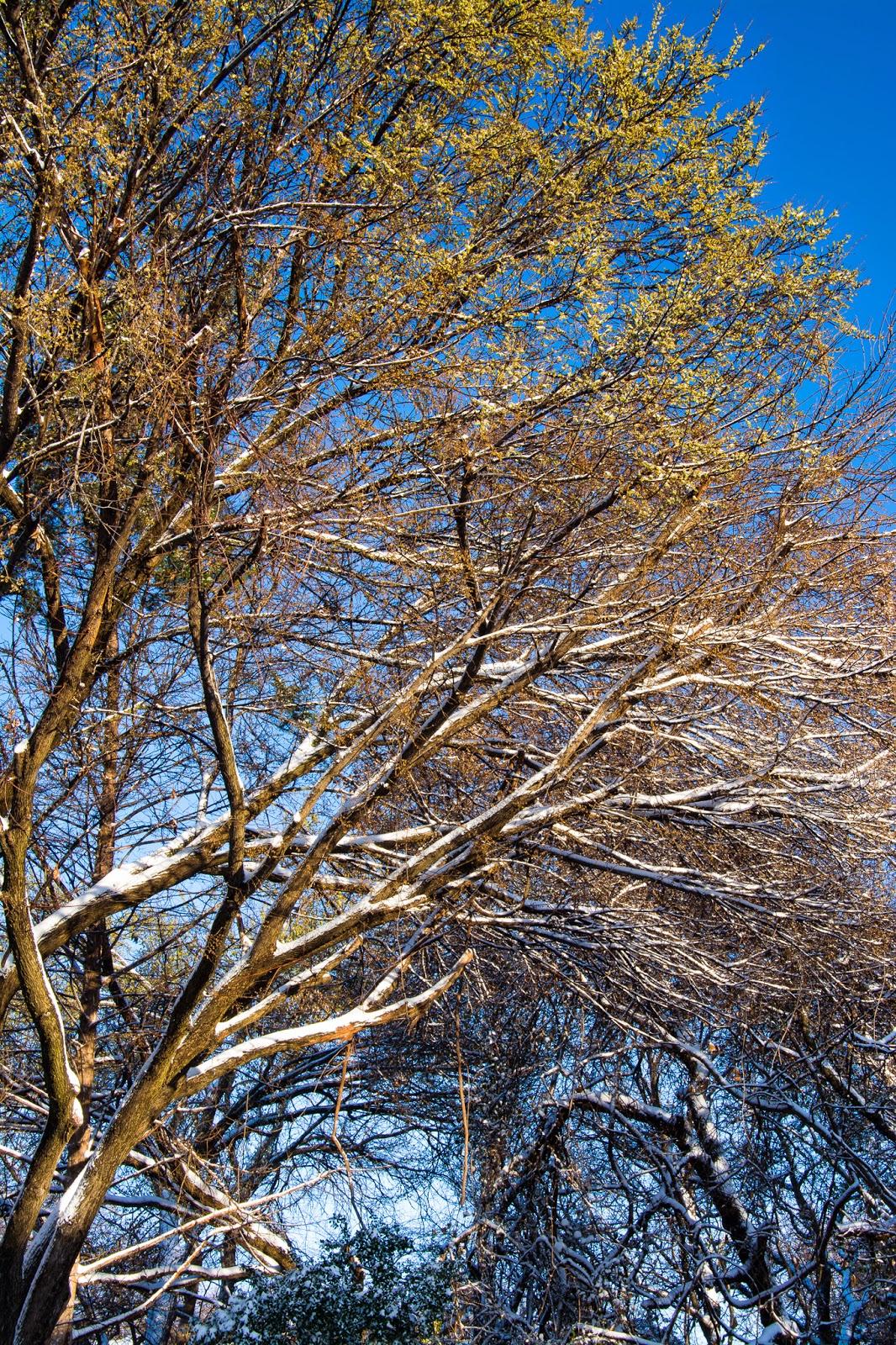 North Texas March 2015 Snowstorm