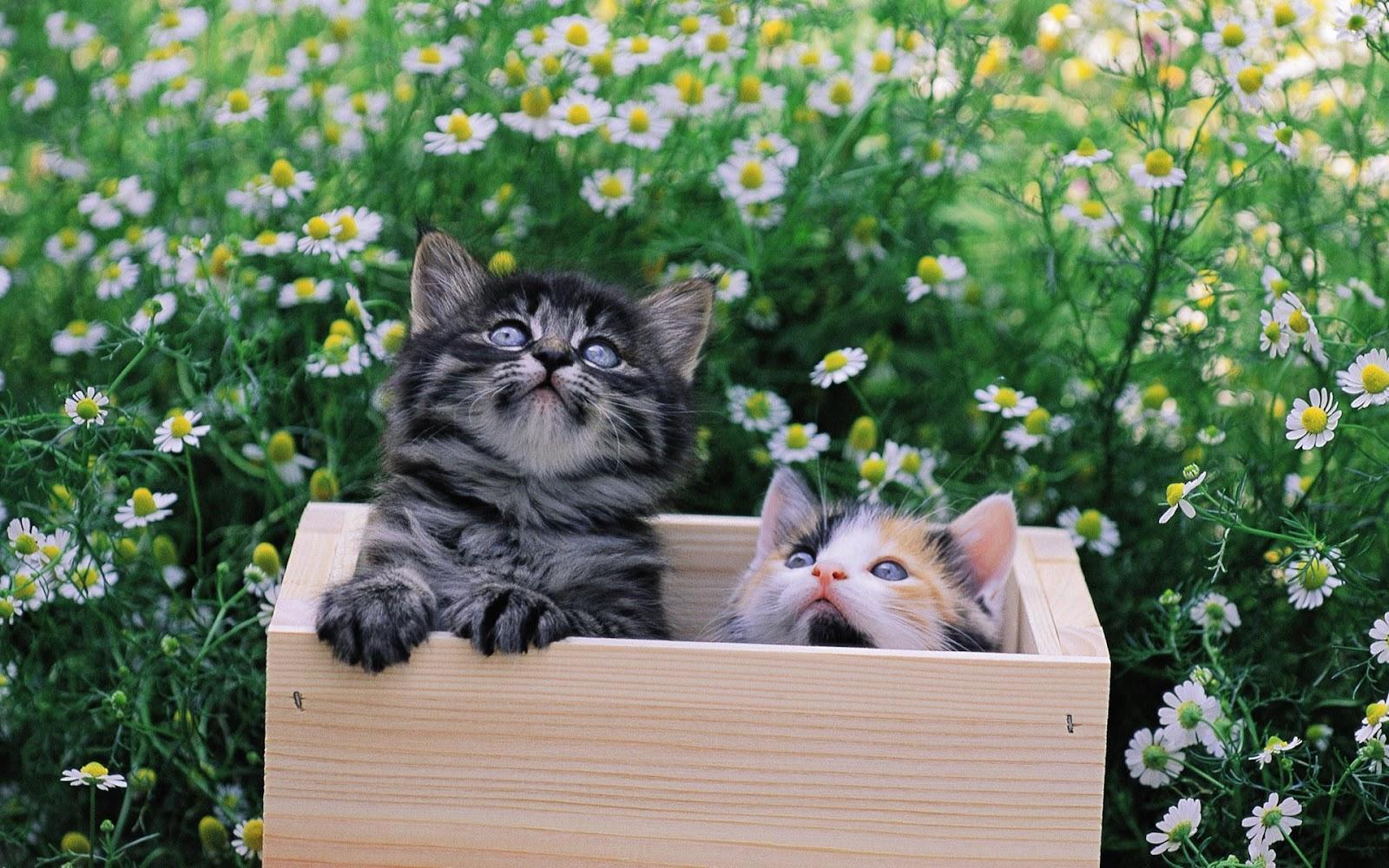 El blog de los gatitos: marzo 2012