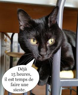 Chat noir sur une chaise
