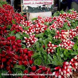 benefits_of_eating_radishes_fruits-vegetables-benefits.blogspot.com(benefits_of_eating_radishes_15)
