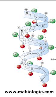 Les structures des protéines en détaille