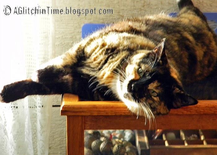 Qetesh-- Bead cat