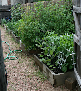 My Edible Yard Urban Homestead - urban organic gardening in Houston, Texas