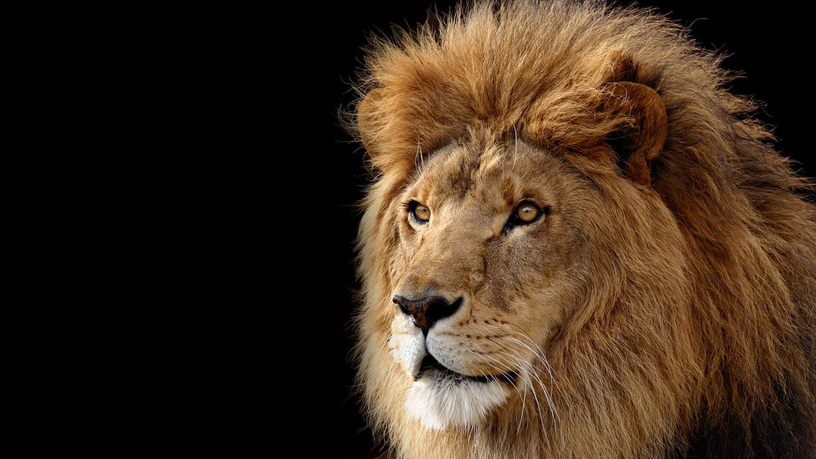 36 Pictures of Lions -Cool Lions Photos | International ...