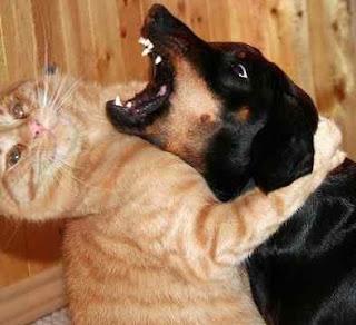 Gato dá grande abraço a cão