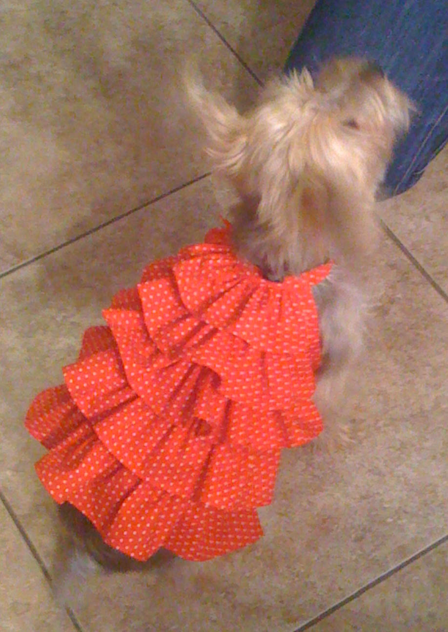 Bella frill dress for small dogs jeuxipadfo Image collections