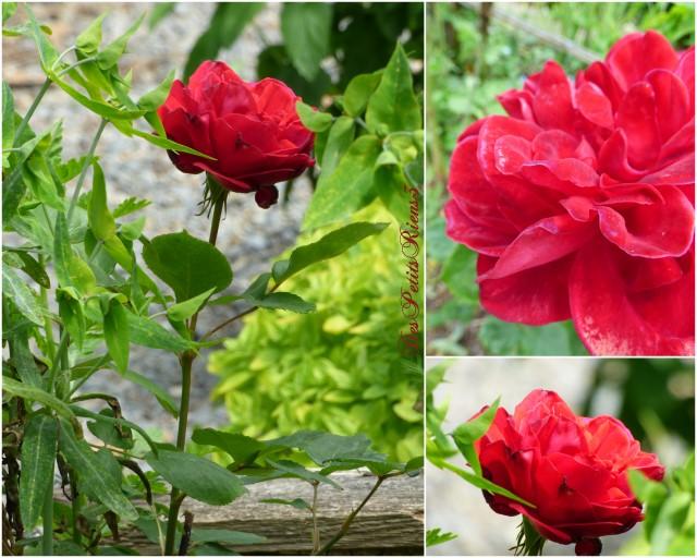 Despetitsriens3 au jardin du rouge - Petit insecte rouge jardin besancon ...