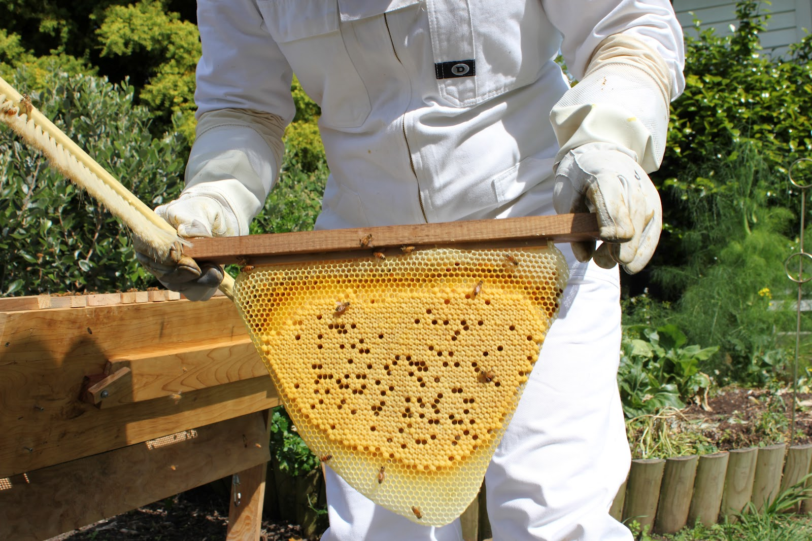 Top Bar Hive Management