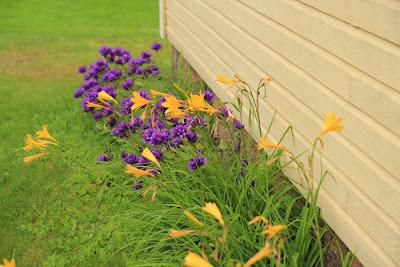 Kukkaistutus keltaisen talon edustalla