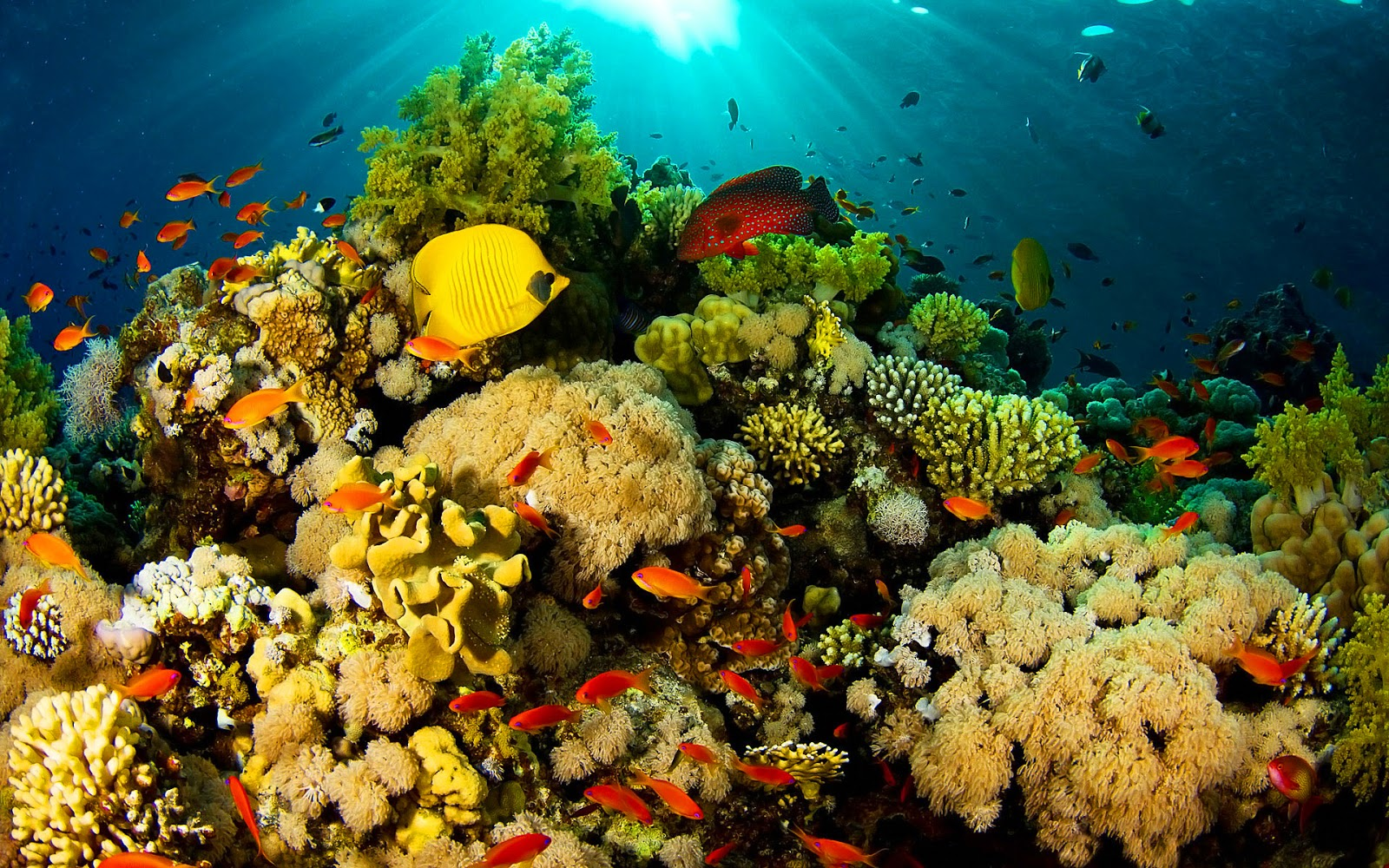 Tropical ocean animals and plants - photo#4