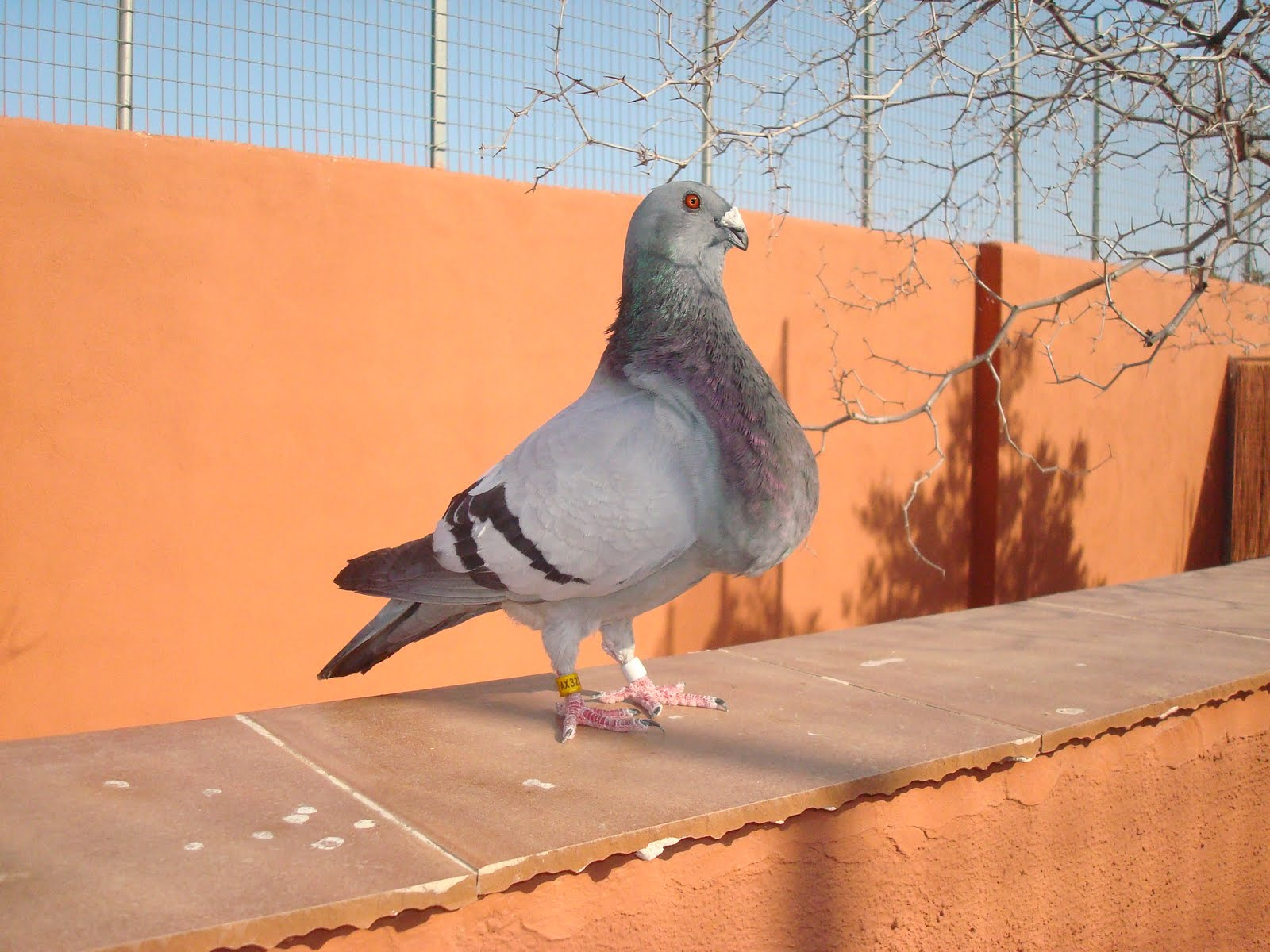 encontrar hembra voyeur cerca de Granada