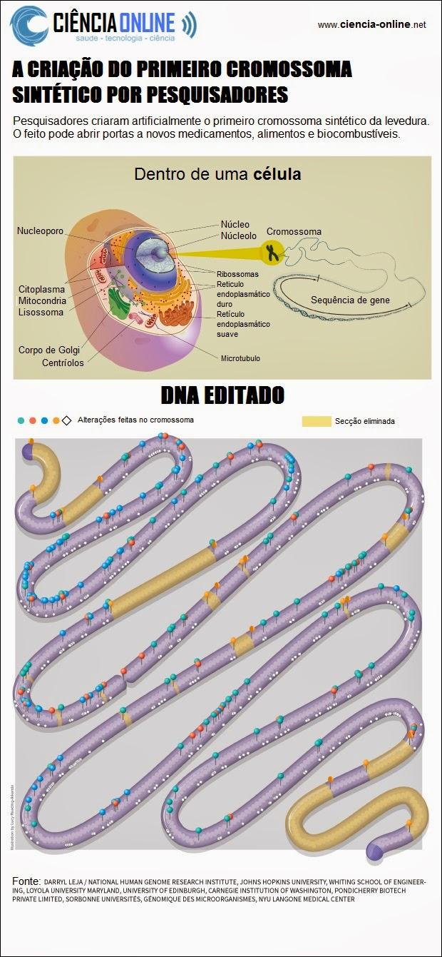 Pesquisadores criaram artificialmente o primeiro cromossoma sintético da levedura. O feito pode abrir portas a novos medicamentos, alimentos e biocombustíveis.