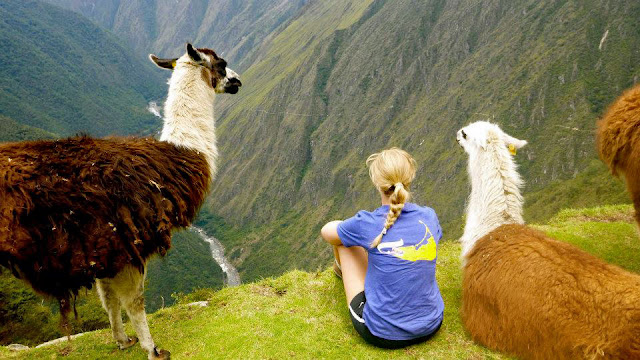 llamas_on_trail