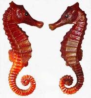 hewan laut termasuk hewan langka di indonesia
