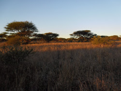 Game reserve at sunrise