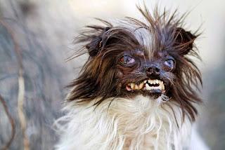 perro más feo del 2014