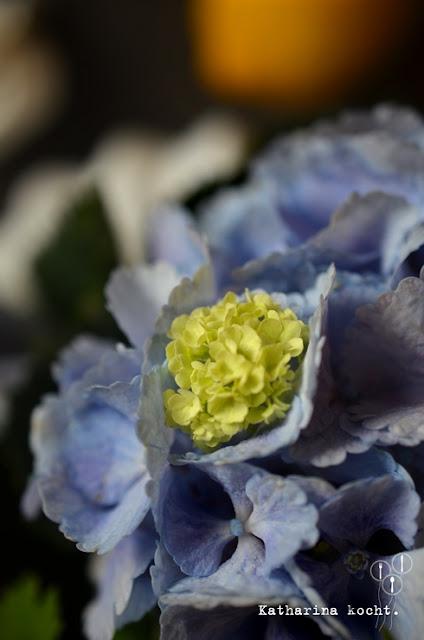 blaue Hortensien und Schneeball Detailaufnahme