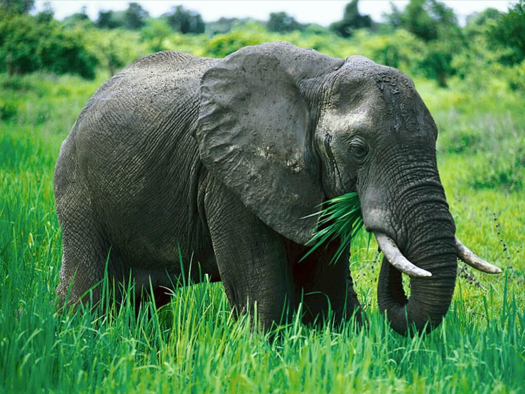 elefantes imagenes: