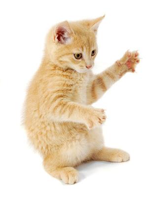 fotografías de gatitos para ver, disfrutar y compartir.