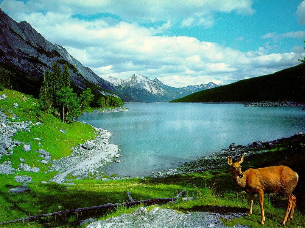 http://1.bp.blogspot.com/-rf3xnSDOnwQ/T8toSLvhx_I/AAAAAAAAETI/M1UHnIArB_o/s1600/nature-wallpaper-41.jpg