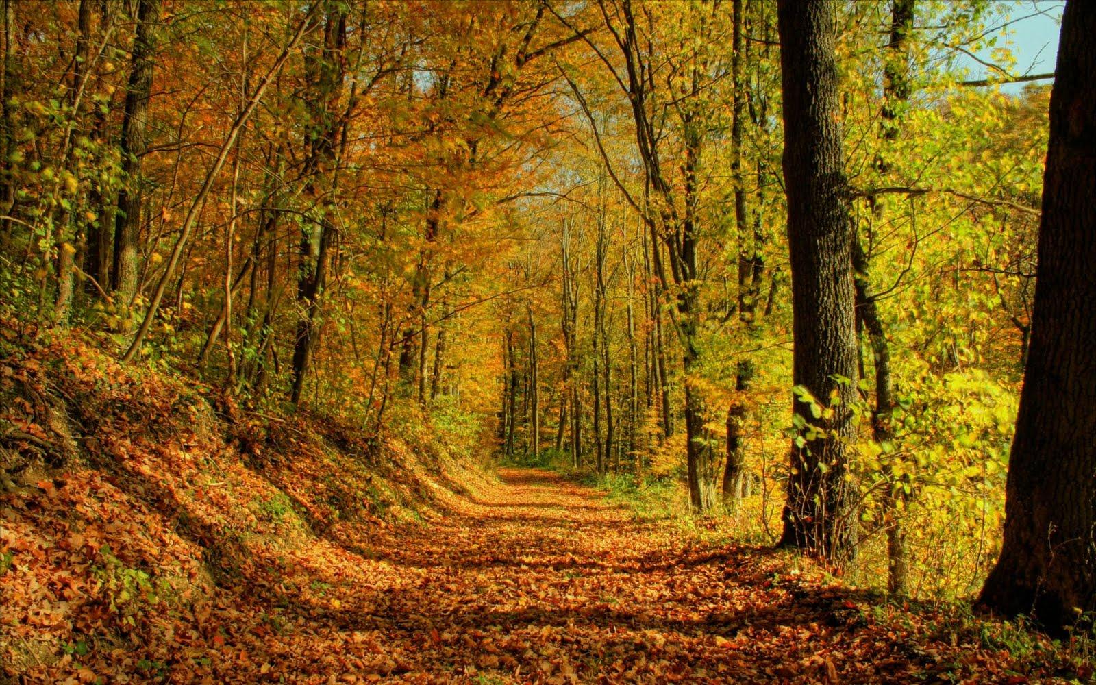 http://1.bp.blogspot.com/-rf5QpO8U6i8/Til15MwRFUI/AAAAAAAAAB4/IdZ6sV0-T6g/s1600/autumn+forest+landscape+wallpaper.jpg