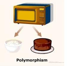 Java_Polymorphism