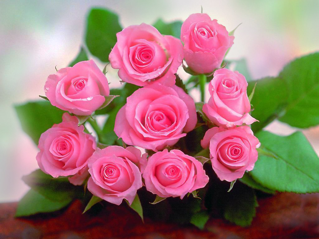 Beautiful Lovely Pink Roses Hd Wallpaper Artline Feel The Creation