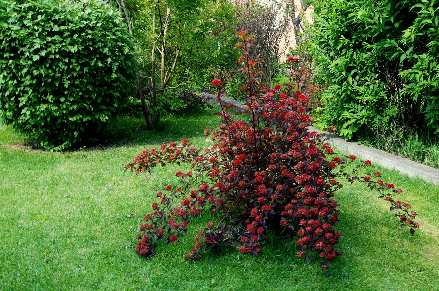 Il mondo in un giardino un diavolo in giardino - Idee piante da giardino ...
