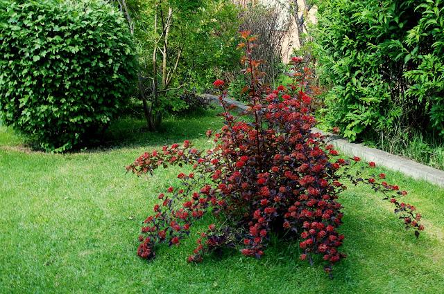 Il mondo in un giardino maggio 2013 for Cespugli giardino