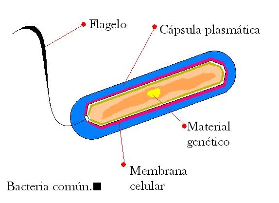 las bacterias producen enfermedades: