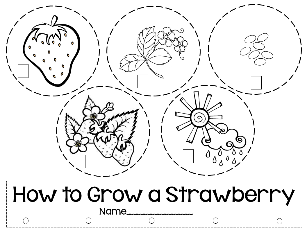 We are doing a mobile on Thursday abou the Life Cycle of a Strawberry.