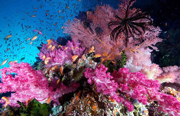 Beautiful Pink Corals