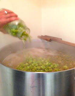 all north carolina beer hops kettle