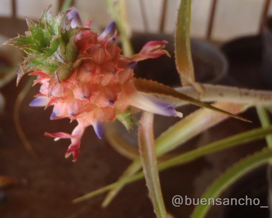 Buensancho jardinero pi a de jard n for 5 plantas decorativas