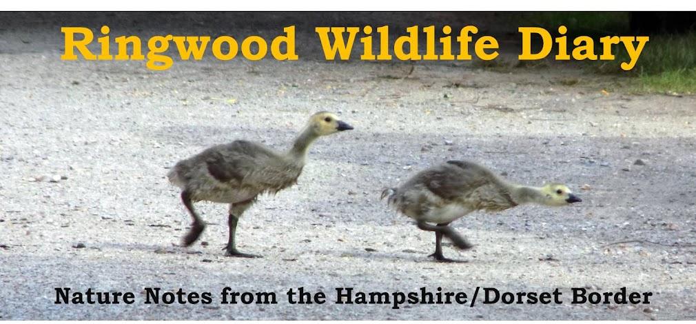Ringwood Wildlife Diary