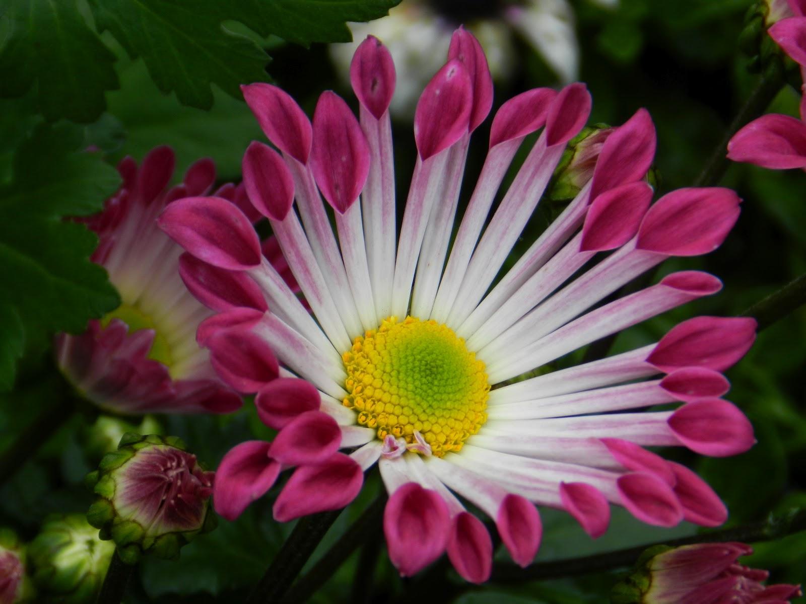 Ggs Garden 美麗花朵 綻放嬌顏
