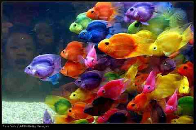 cores diversas